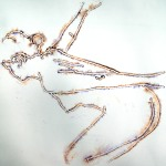 Shimmer Lady 1